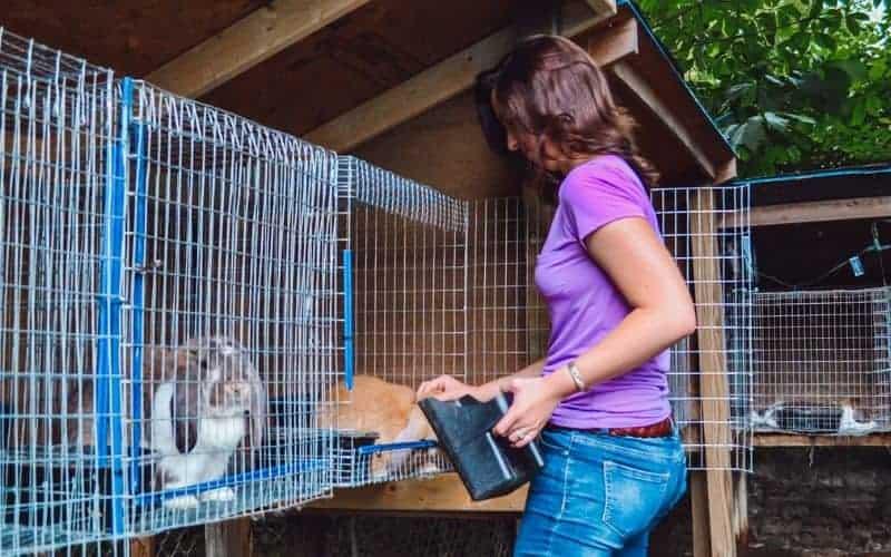 leah lynch feeding her rabbits on a hobby farm