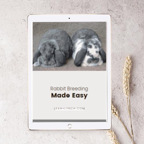 Rabbit Breeding Made Easy ebook Mock Up