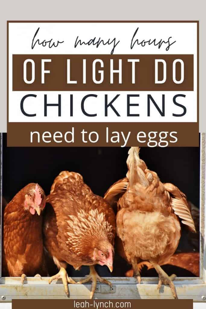 Pin image for blog post how many hours of light do chickens need to lay eggs.