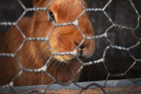 rabbit inside a cage
