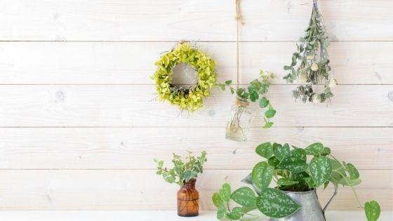 live plants to make a room feel cozy