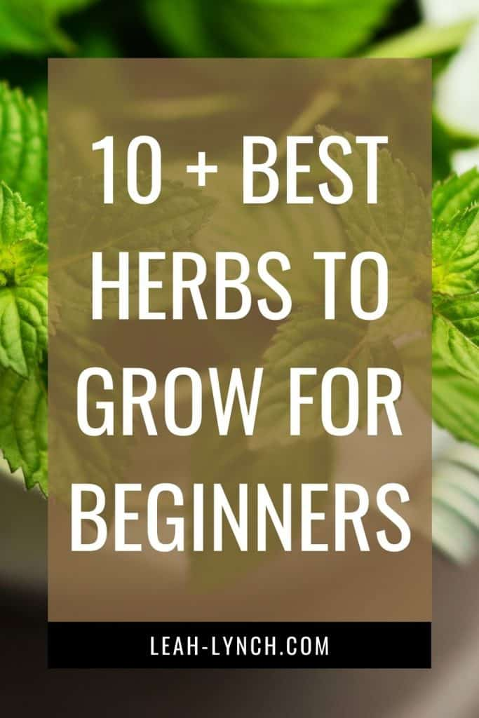 Pin image for the blog post: best herbs to grow for beginners.