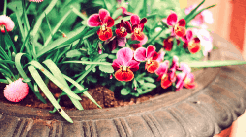 Pot of flowers to make your hobby farm look nice.
