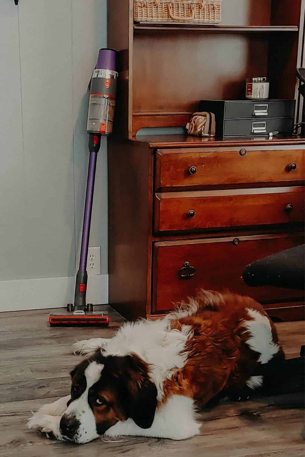 Best Budget-Friendly Vacuum Cleaner For Pet Hair