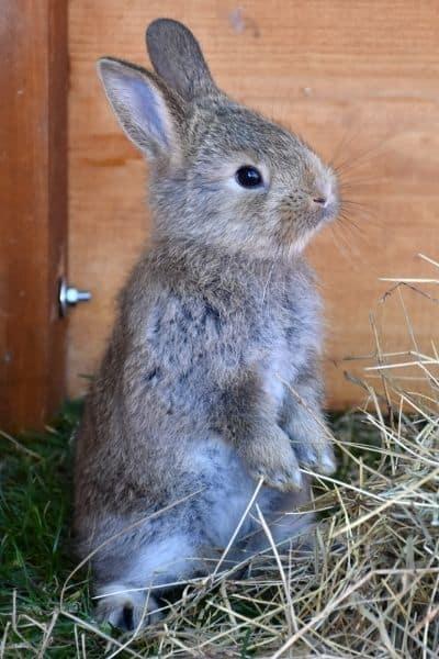 Rabbit Words