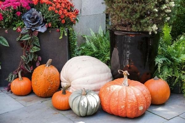 5 Affordable Fall Decor Tips