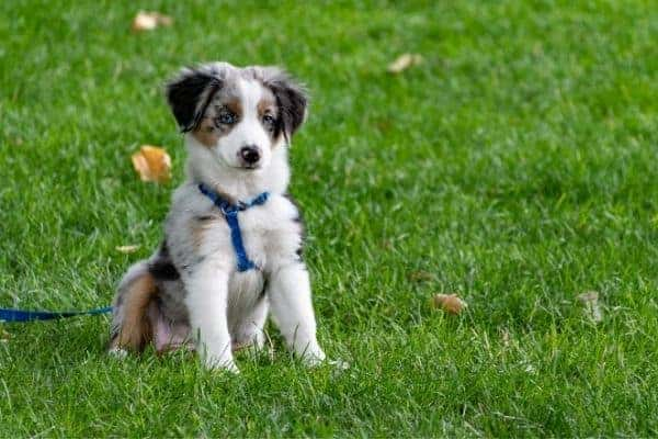 3 Common Behavior Issues In Dogs – And How To Fix Them