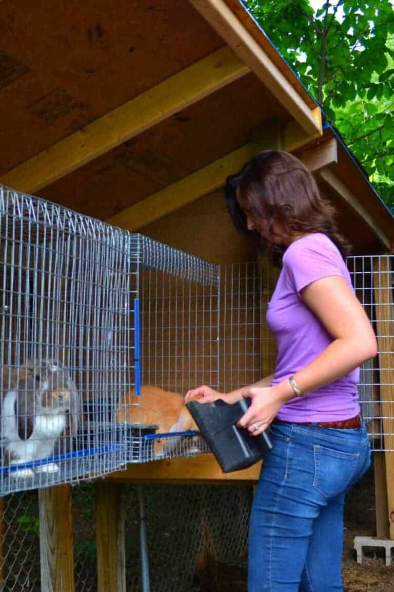 Rabbit Housing Must-Haves For A Healthy Herd