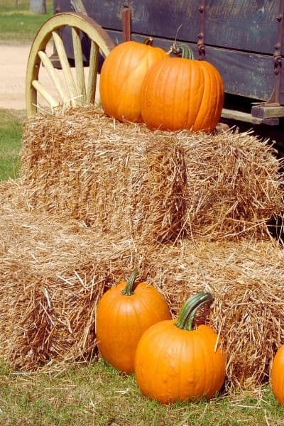 The Best Fall Bucket List For Everyone
