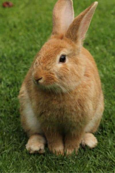 5 Tips To Find The Best Outdoor Rabbit Cage