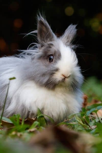 How To Stop Rabbits Fighting [Signs Of Aggressive Behavior]