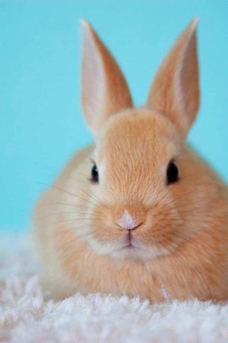 Top Reasons I Won't Have An Indoor Pet Rabbit