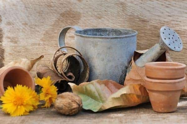 watering can, pots, and fall leaves on a table