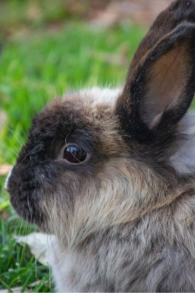 What To Feed A Rabbit –  Beginners Guide