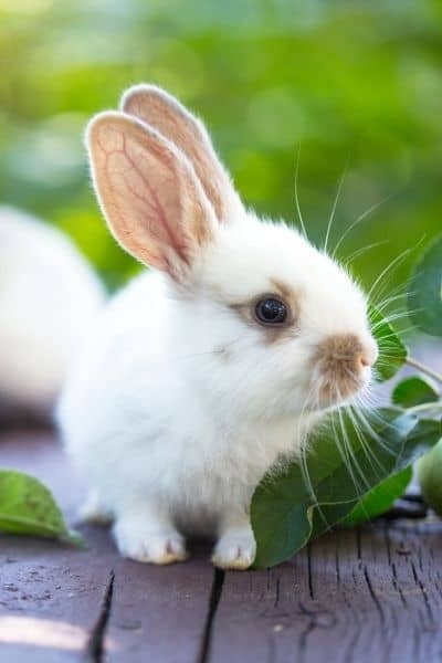 Before You Go Buy Rabbits – Know This Things