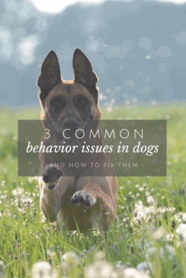 3 common behavior issues in dogs and how to avoid them in your dog.