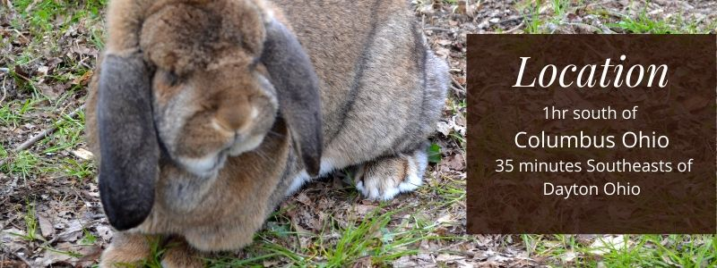French lop rabbitry location, 1hr south of Columbus Ohio.