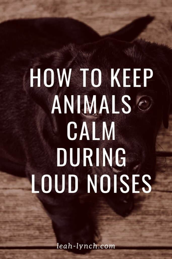 How to keep your pets and livestock calm during loud noises like fireworks or thunderstorms.