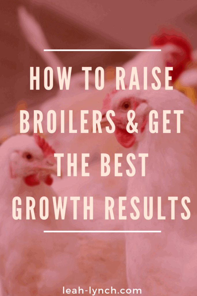 How to raise broilers and get the best growth results. #meatbirds #urbanfarm #boilers