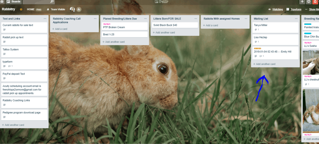 Rabbitry waiting list trello board